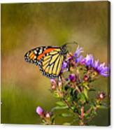 Monarch Butterfly In The Afternoon Sun Canvas Print