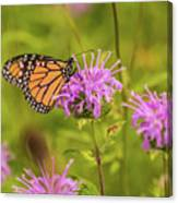 Monarch Butterfly On Bee Balm Flower Canvas Print