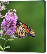 Monarch Butterfly On Butterfly Bush 2011 Canvas Print