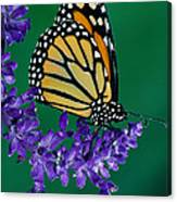Monarch Butterfly On Flower Blossom Canvas Print