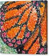 Monarch Butterfly On Ocotillo Blossom Canvas Print