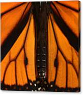 Monarch Butterfly Wings Canvas Print