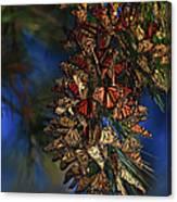 Monarch Cluster Canvas Print