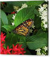 Monarch Framed Canvas Print
