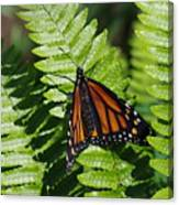 Monarch On A Fern Canvas Print