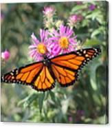 Monarch On Blanket Flower Canvas Print