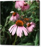 Monarch On Coneflower Canvas Print
