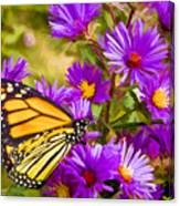 Monarch On Mt. Washington Canvas Print