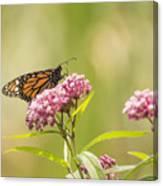 Monarch On Swamp Milkweed 2014-1 Canvas Print