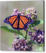 Monarch On The Milkweed Canvas Print