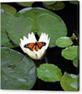Monarch On Waterlily Canvas Print