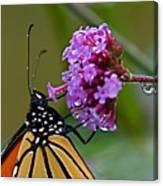 Monarch Purple Canvas Print