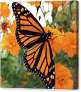 Monarch Series 1 Canvas Print