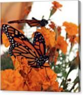 Monarch Series 4 Canvas Print