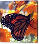 Monarch Series 7 Canvas Print