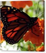 Monarch Series 8 Canvas Print