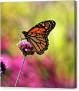Monarch Song Canvas Print