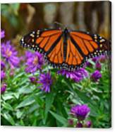 Monarch Spreading Its Wings Canvas Print