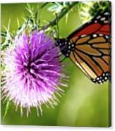 Monarch Thistle Canvas Print