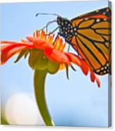 Monarch Working Canvas Print