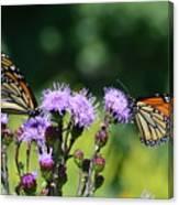 Monarchs And Blazing Star Canvas Print