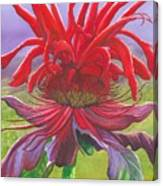 Monarda Canvas Print