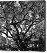 Monastery Tree Canvas Print