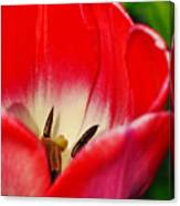 Monet Garden Red Tulip Canvas Print
