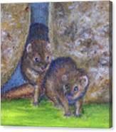 Mongoose #511 Canvas Print