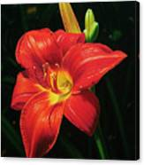 Monikas Red Lily Canvas Print