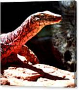 Monitor Lizard Canvas Print