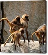 Monkey Family Canvas Print