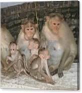 Monkey Family Tiruvannamalai India Canvas Print