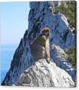Monkey In Gibraltar Canvas Print