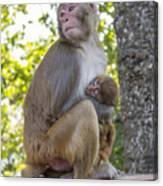 Monkey Mom Canvas Print