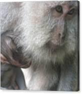 Monkey Mother 3 Canvas Print