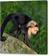 Monkey On My Back Canvas Print