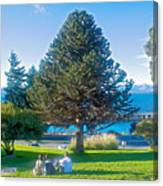 Monkey Puzzle Tree In Central Park In Bariloche-argentina  Canvas Print