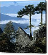 Monkey Puzzle Trees In Huerquehue National Park Canvas Print