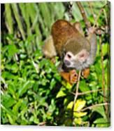 Monkey Time Canvas Print