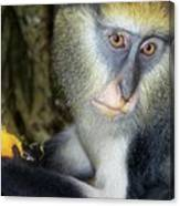 Monkey With His Mango Canvas Print