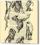 Monkeys Black And White Illustration Canvas Print