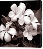 Monochrome Hawaii No. 3 Canvas Print