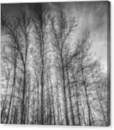 Monochrome Sunset Trees Canvas Print