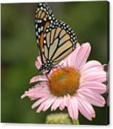 Monorch Butterfly Canvas Print