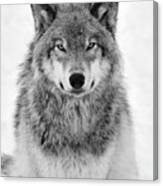 Monotone Timber Wolf  Canvas Print