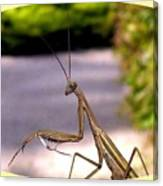 Monster Mantis Canvas Print