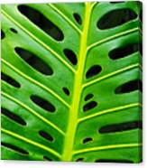 Monstera Leaf Canvas Print
