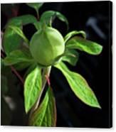 Monstrous Plant Bud Canvas Print