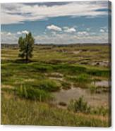Montana Country And Tree Canvas Print